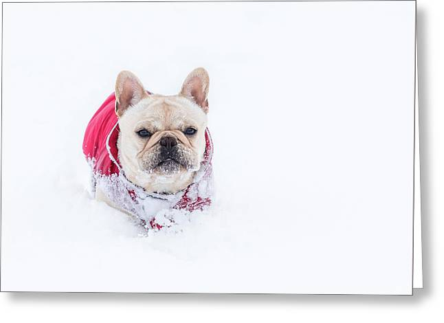 Frenchie In The Snow Greeting Card
