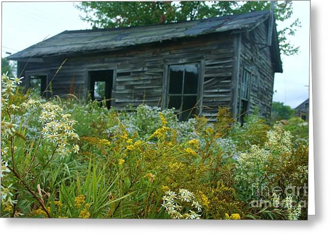 Fresh And Old Greeting Card by Dennis Curry