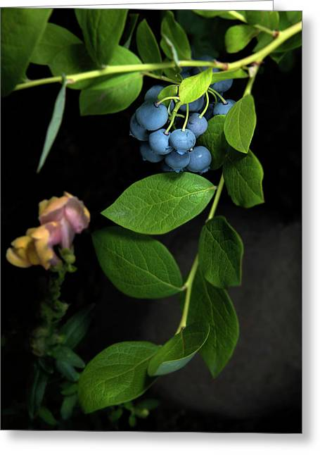 Fresh Blueberries Greeting Card by K Powers Photography