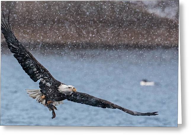 Greeting Card featuring the photograph Fresh Catch by Kelly Marquardt