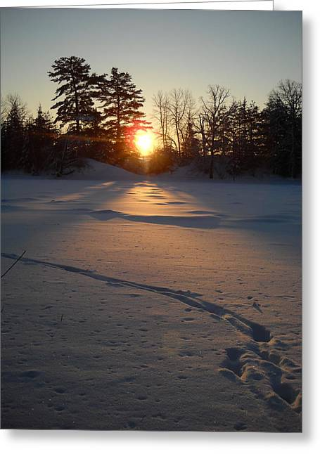 Fresh Deer Tracks At Sunrise Greeting Card