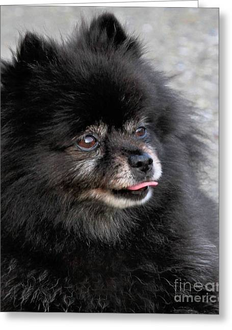 Greeting Card featuring the photograph Fresh Dog by Debbie Stahre