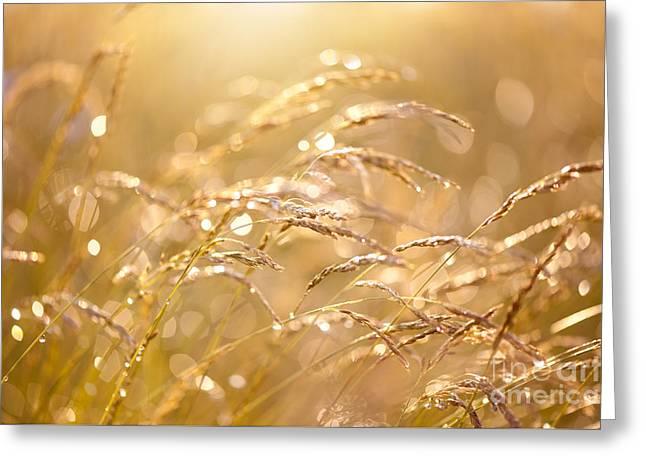 Fresh Meadow After The Rain Greeting Card by Arletta Cwalina