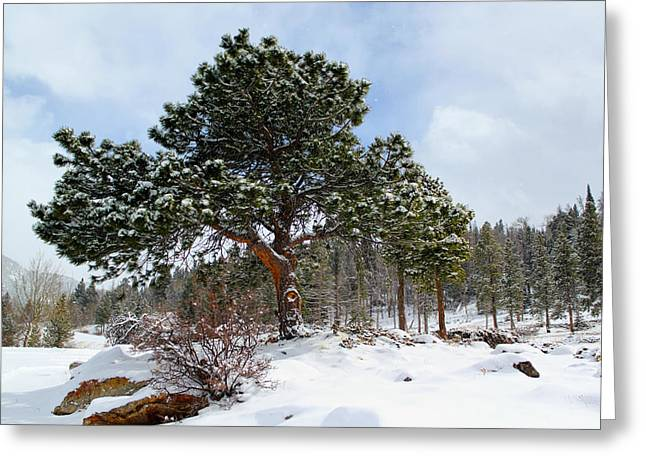 Fresh Mountain Snow Greeting Card