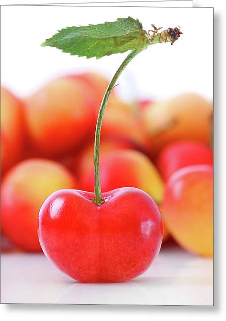 Fresh Ripe Cherries Isolated On White Greeting Card by Sandra Cunningham