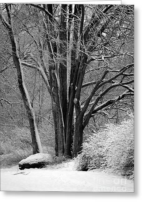 Fresh Snow  Greeting Card by Carol Groenen