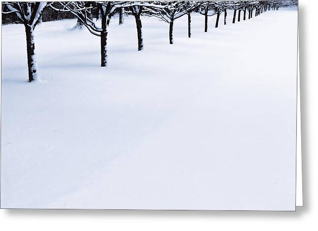 Fresh Snow Greeting Card by John Hansen