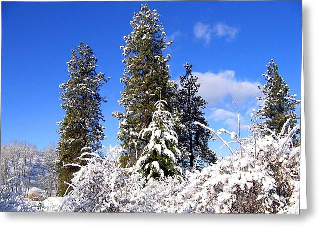 Greeting Card featuring the photograph Fresh Winter Solitude by Will Borden