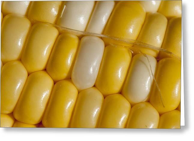 Fresh Yellow Corn Greeting Card