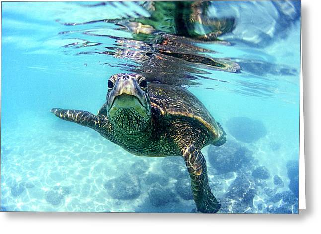 friendly Hawaiian sea turtle  Greeting Card by Sean Davey