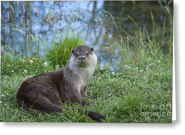 Friendly Otter Greeting Card by Philip Pound