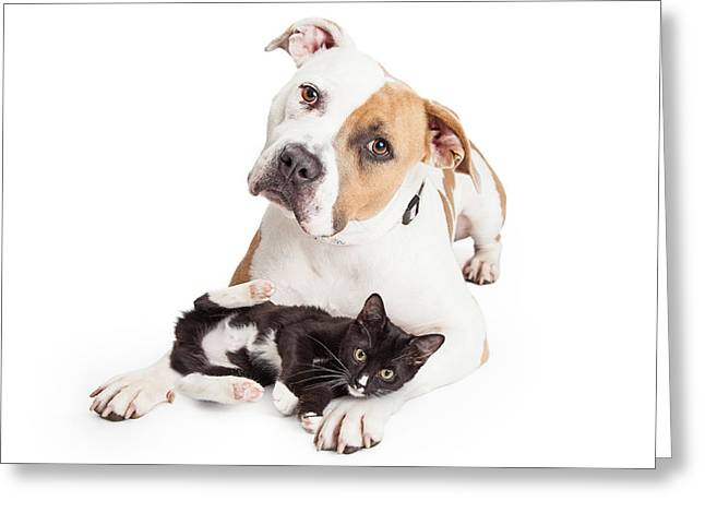 Friendly Pit Bull Dog And Affectionate Kitten Greeting Card
