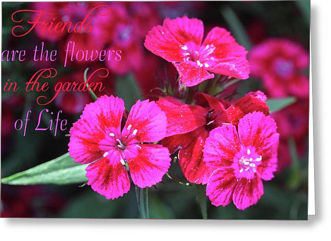 Greeting Card featuring the photograph Friends Are The Flowers by Trina Ansel