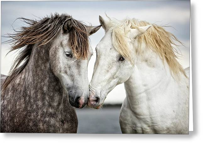 Friends Iv - Colour Greeting Card by Tim Booth