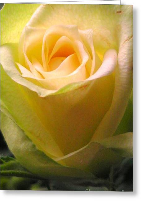 Friendship Rose Greeting Card