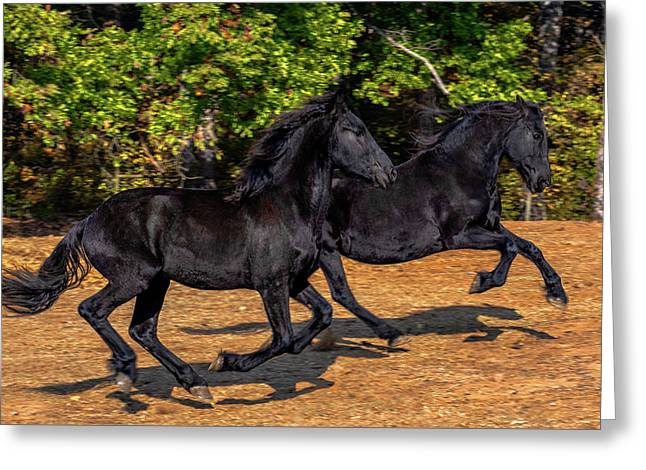 Friesian Frolic Greeting Card by Eric Albright