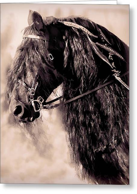 Friesian Horse Beauty II Greeting Card by Athena Mckinzie
