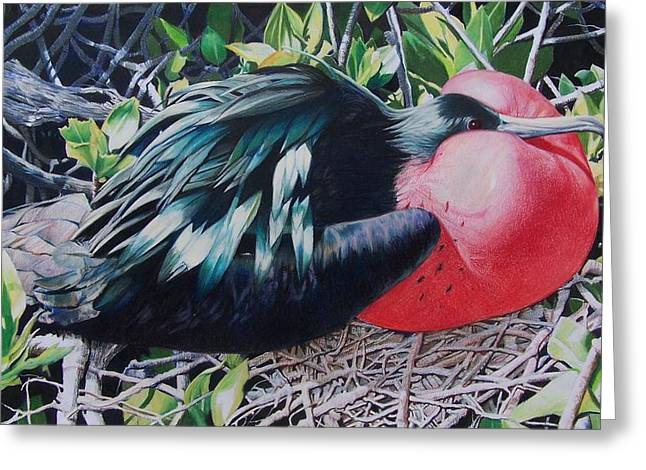 Greeting Card featuring the mixed media Frigate Bird  by Constance Drescher