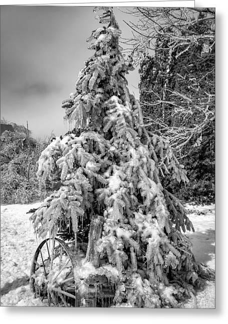 Frigid Spruce Bw Greeting Card by Steve Harrington
