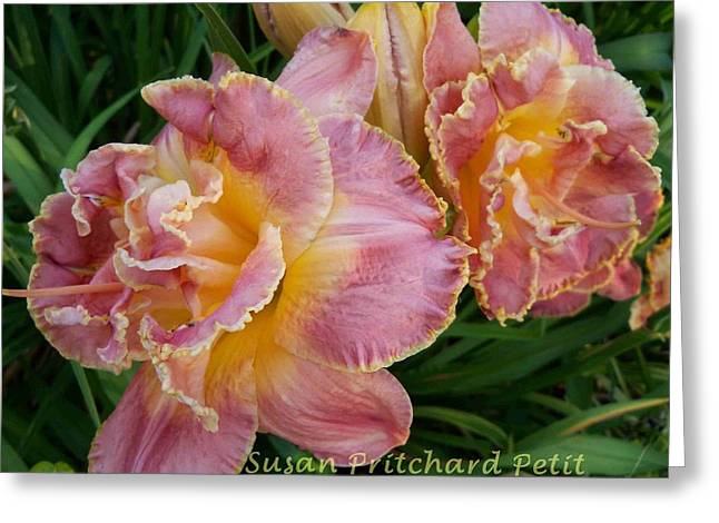 Frills Greeting Card by Sandy Collier
