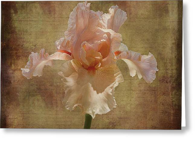 Frilly Iris Greeting Card