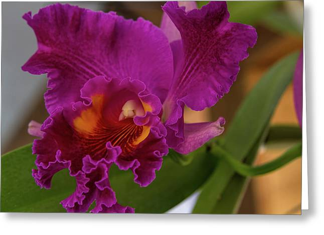 Frilly Orchid Greeting Card