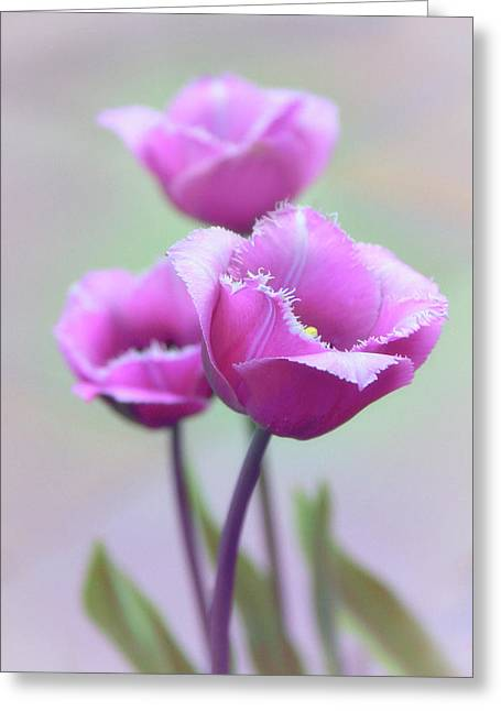 Greeting Card featuring the photograph Fringe Tulips by Jessica Jenney