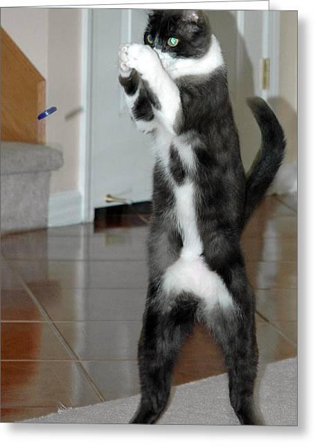 Frisbee Cat Greeting Card by LeeAnn McLaneGoetz McLaneGoetzStudioLLCcom