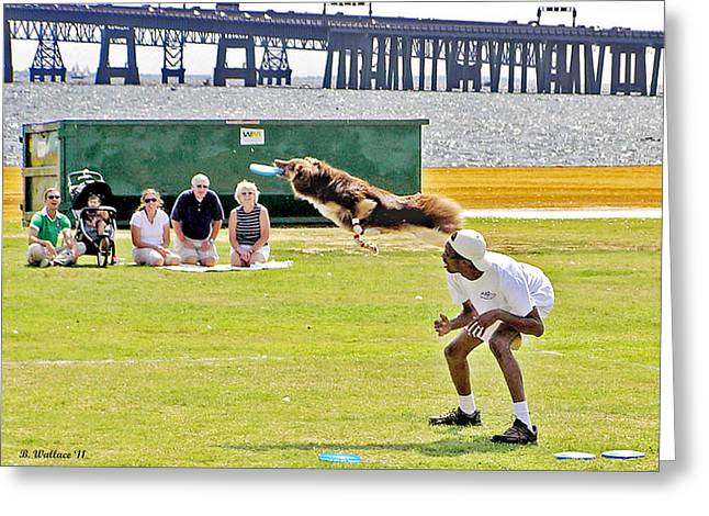 Frisbee Dog Greeting Card by Brian Wallace