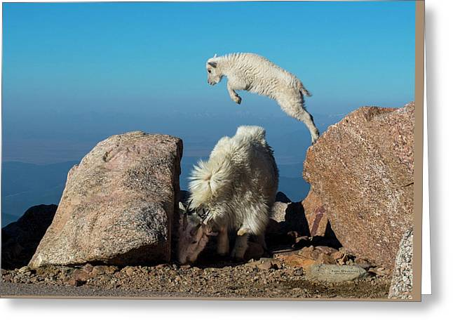 Leaping Baby Mountain Goat Greeting Card