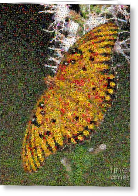 Fritillary Butterfly Mosaic Greeting Card by Scott Camazine