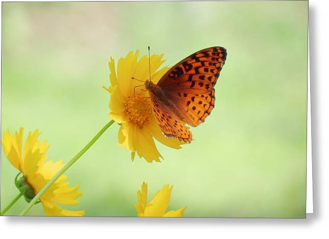 Fritillary Fun Greeting Card