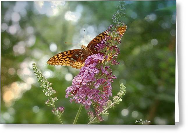 Fritillary Greeting Card by Molly Dean