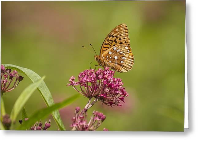 Fritillary On Milkweed 2014-2 Greeting Card by Thomas Young