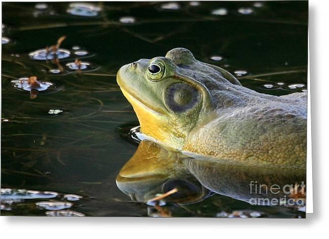Frog At Sunset Greeting Card by Paula Guttilla