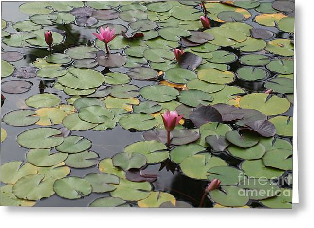 Frog Gardens Greeting Card by Amy Holmes