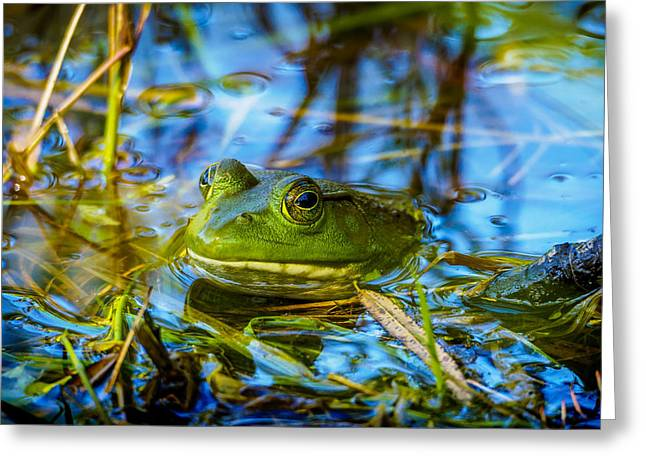 Frog In My Pond Greeting Card