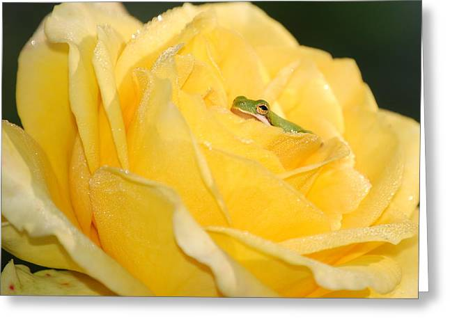 Frog In Yellow Rose Greeting Card