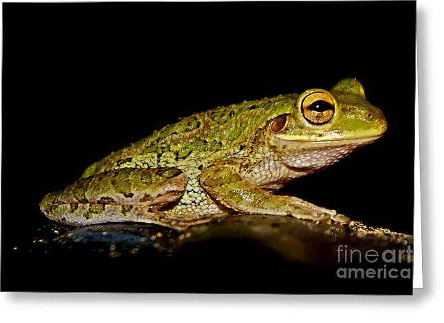 Greeting Card featuring the photograph Cuban Tree Frog by Olga Hamilton