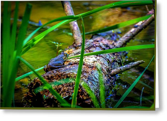 Frog On A Log 1 Greeting Card
