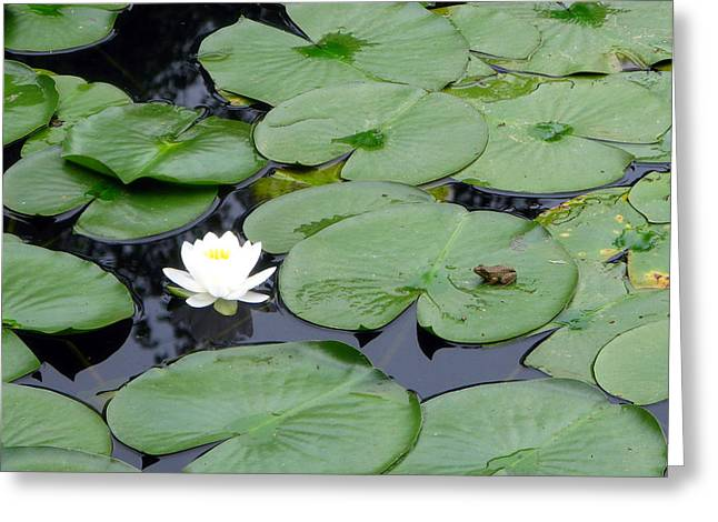 Frog On Lily Pad Greeting Card by George Jones