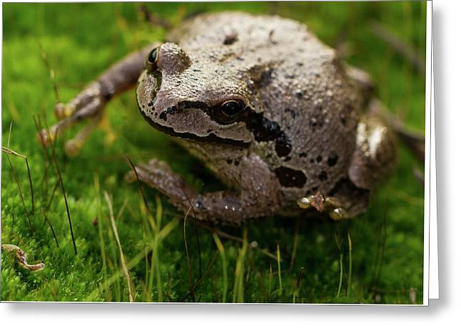 Frog On The Grass Greeting Card by Jean Noren