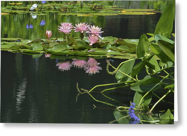 Water Lily Reflections Greeting Card by Linda Geiger