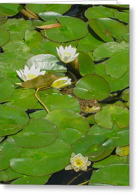 Frog With Water Lilies Greeting Card