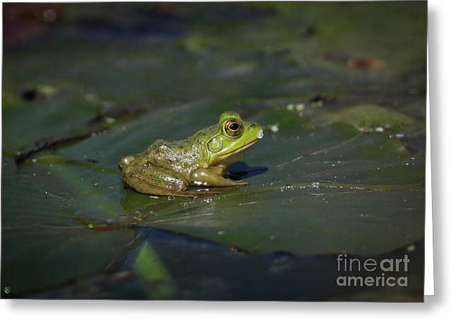 Froggy 2 Greeting Card by Douglas Stucky