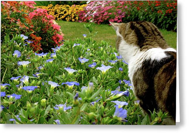 Frolic In The Flowers Greeting Card