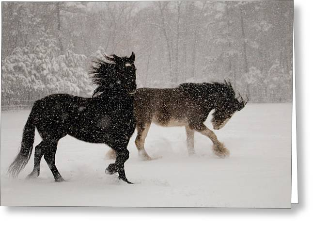 Frolic In The Snow Greeting Card
