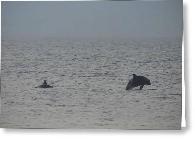 Frolicking Dolphins Greeting Card by Bill Cannon