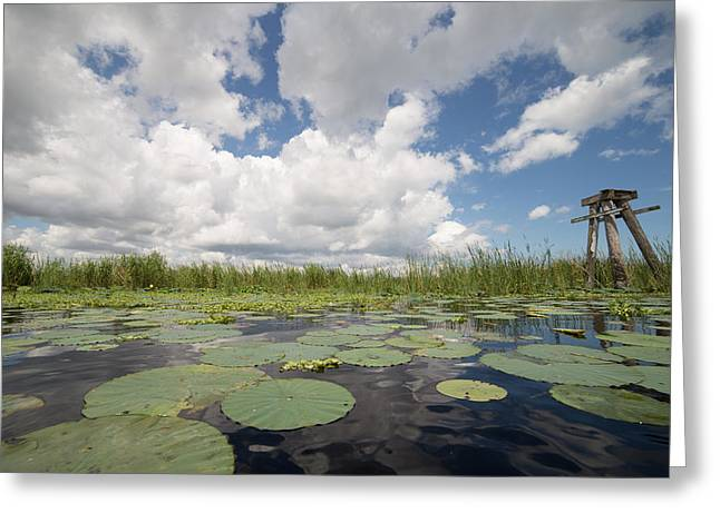 From A Frog's Point Of View - Lake Okeechobee Greeting Card
