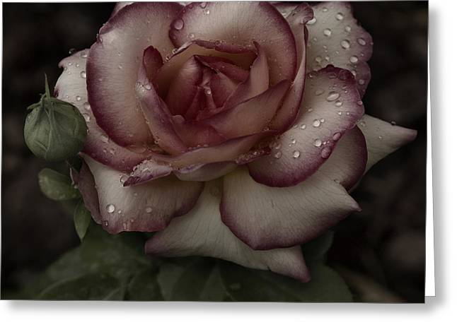 From Me To You Winter Rose Greeting Card